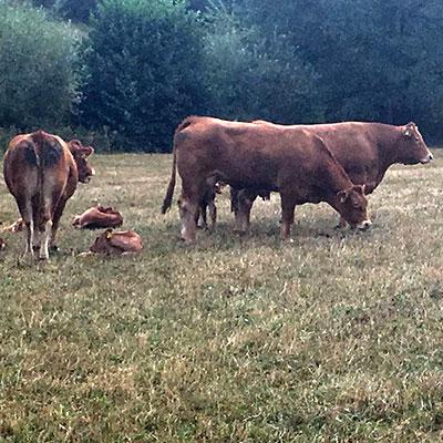 Ein Besuch bei den Zuchttieren des bekannten hessischen Züchters Stefan Kohlmann (Eiterfeld-Buchenau), durfte natürlich beim BDL-Jahrestreffen 2018 nicht fehlen